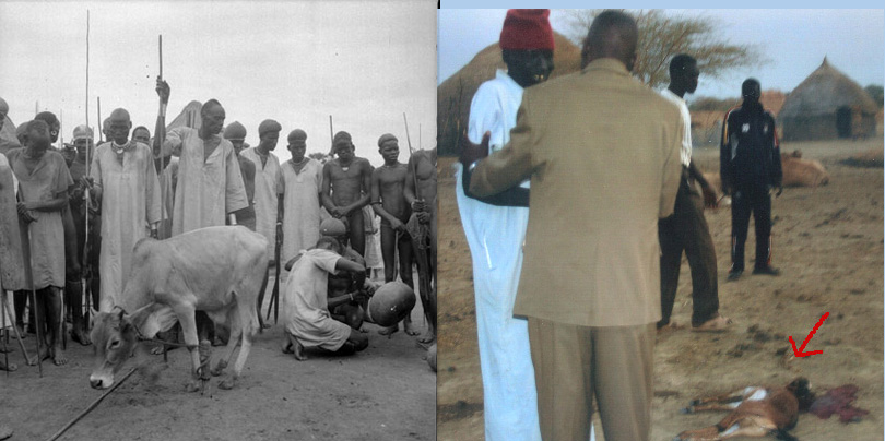 Left: Preparations for a Dinka bull-calf sacrifice, photographed by Godfrey Lienhardt between 1947 and 1951. The photograph is in the collection of the Pitt Rivers Museum. Right: Returning Lost Boy, c. 2010, honored by goat sacrifice. (See comments below.)